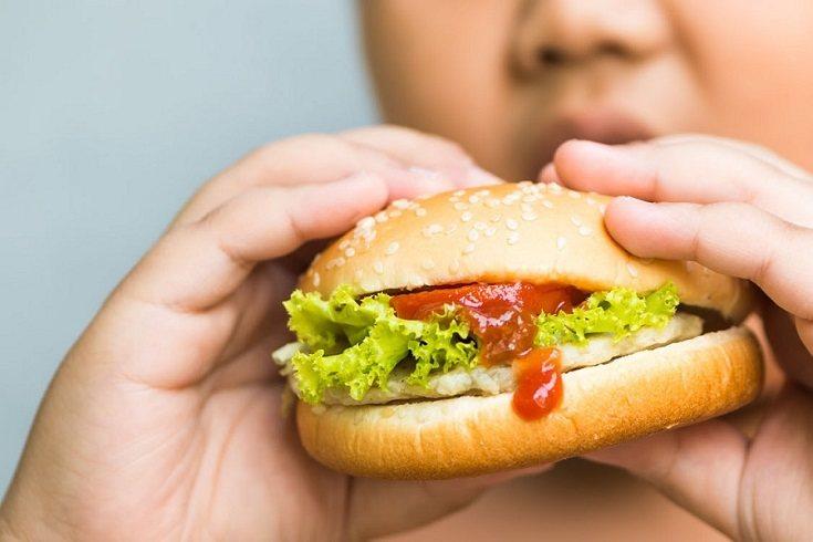 La dieta principal debe estar compuesta en su gran mayoría por alimentos de origen vegetal