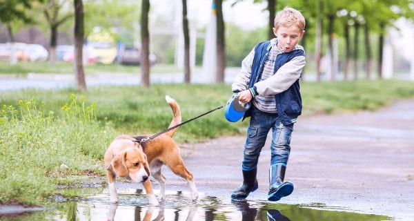 Si educamos bien a los niños, el tener animales les enseñará a ser responsables