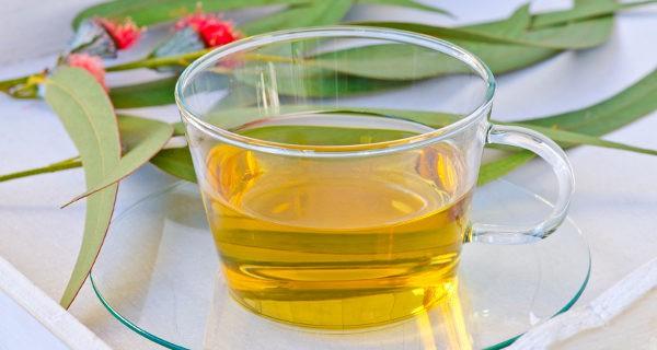 Las infusiones de eucalipto también nos ayudarán a hacer desaparecer piojos y liendres