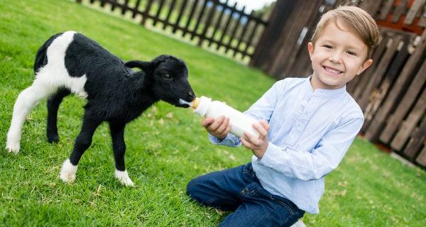 Si no tenemos mascotas, podemos llevar a los niños a granjas