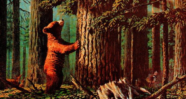 Uno de los amigos se subió a un árbol al ver el oso