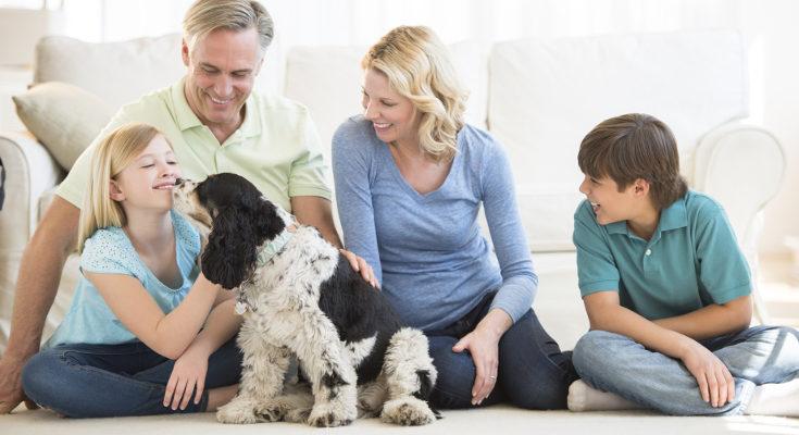 El perro no es un objeto, es un nuevo miembro de la familia que tenemos que desear todos