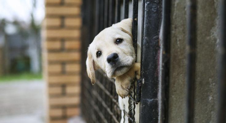 Debemos ser responsables y no abandonar a los animales