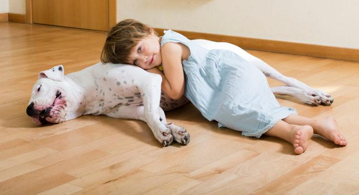 Creemos erróneamente que lso perros grandes son más agresivos