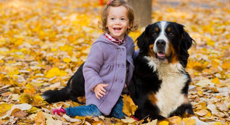 Va a ser muy importante cómo eduquemos y enseñemos al perro a comportarse
