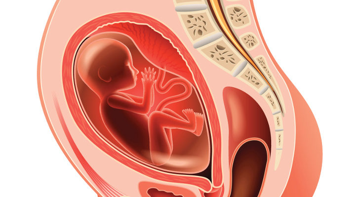 La placenta es la encargada de que el bebé reciba oxígeno y nutrientes de la madre, y también funciona como filtro