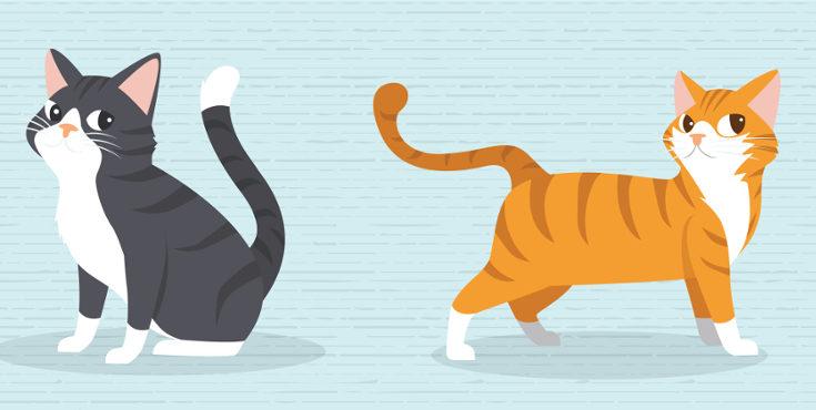 El gato, su mayor afición es cazar al ratón