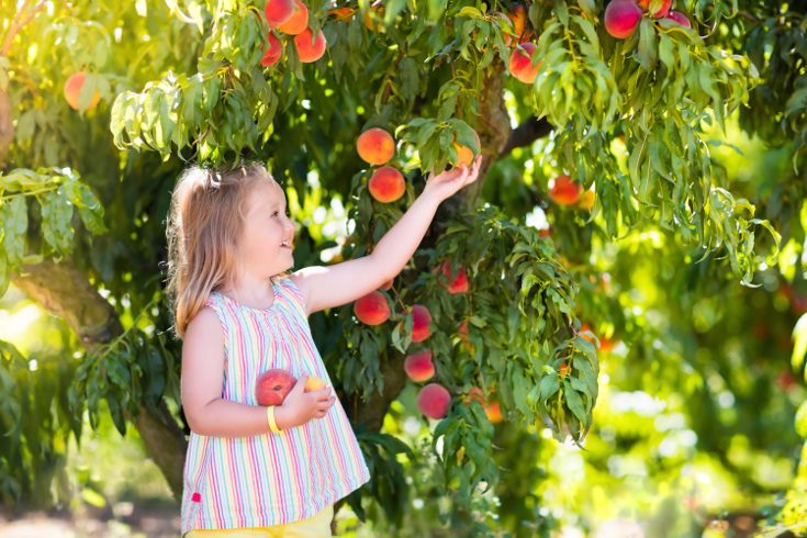 En verano el melón y la sandía son las frutas estrella, además tienen mucha agua