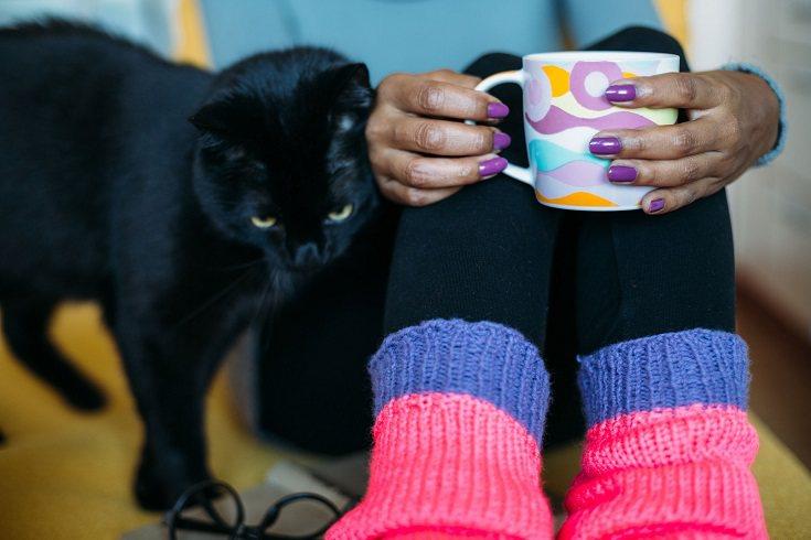 Los gatos son seres vivos que tienen unas necesidades físicas y emocionales que se deben cuidar.