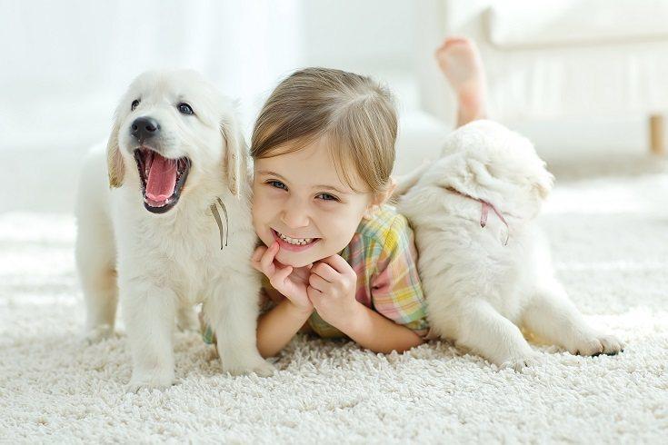 Los animales de servicio y apoyo emocional pueden hacer mucho por tu hijo con NEE