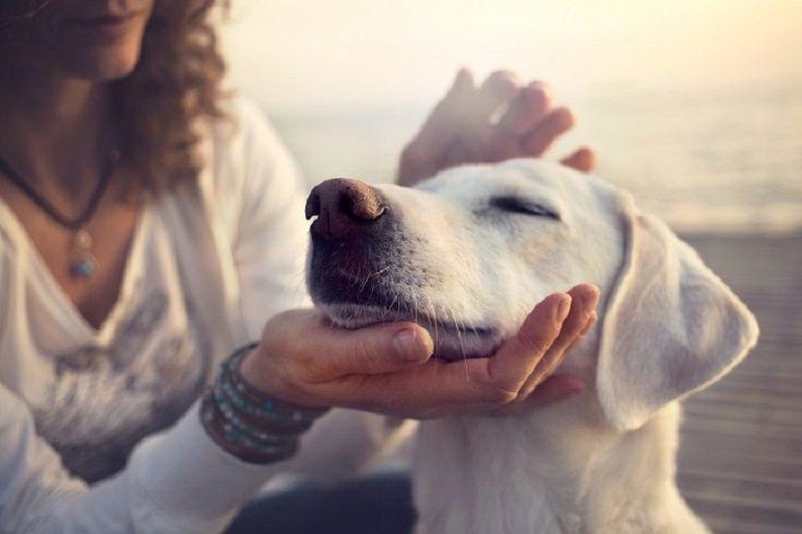 Los expertos insisten en que una mascota puede aumentar la autoestima del niño