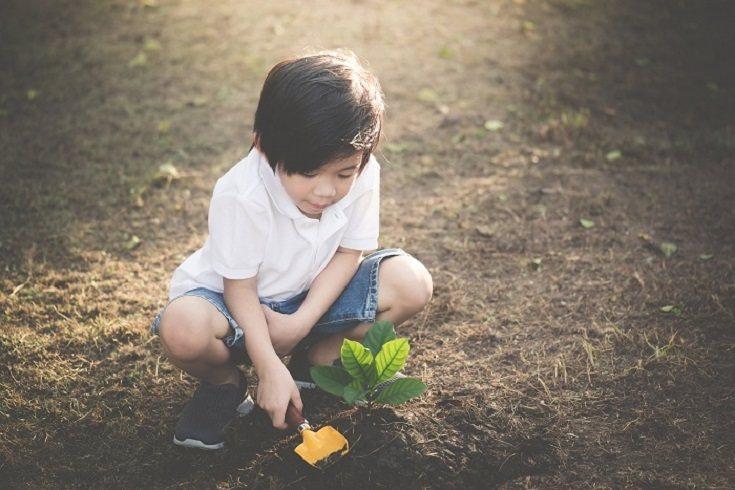 Planear, sembrar y cuidar un huerto familiar ofrece actividad física