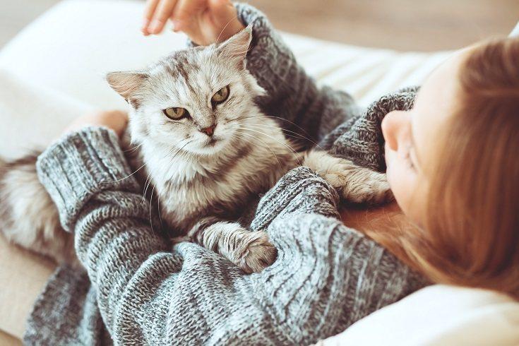 La toxoplasmosis es una infección provocada por un parásito que se suele hospedar en los gatos