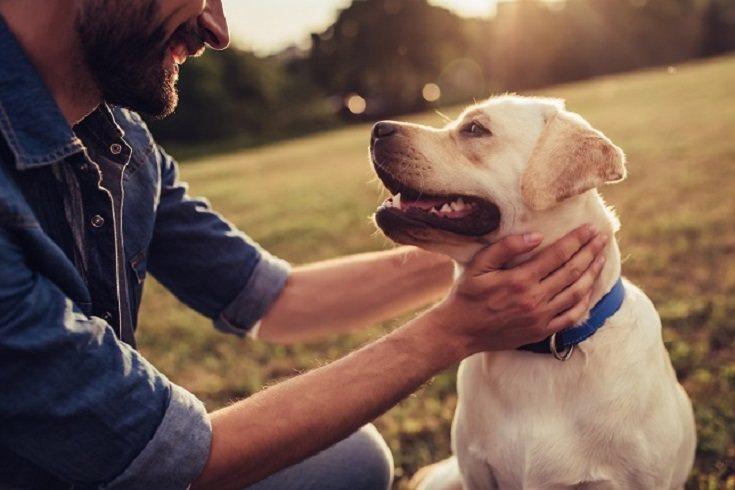 Un perro mestizo también puede ser el mejor compañero de vida familiar