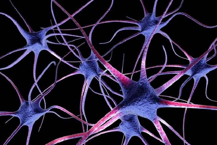 El cerebro del niño se divide en tres partes