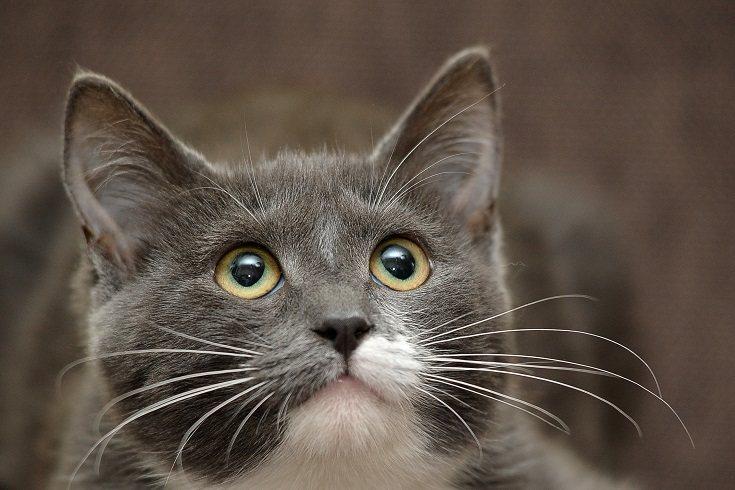 La alergia a los gatos es muy común en la sociedad