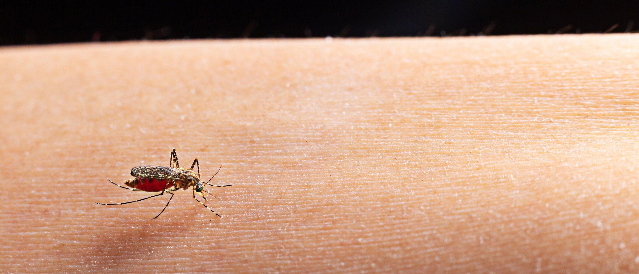 Qué hacer si a tu bebé le pica un insecto en verano