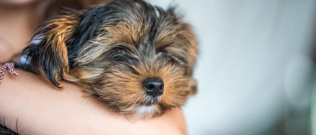 Ventajas de adoptar un perro peque o si tenemos ni os peque os - Casas para perros pequenos ...