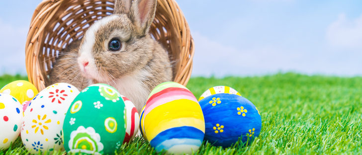 La historia del conejo de pascua bekia padres for El conejo de pascua