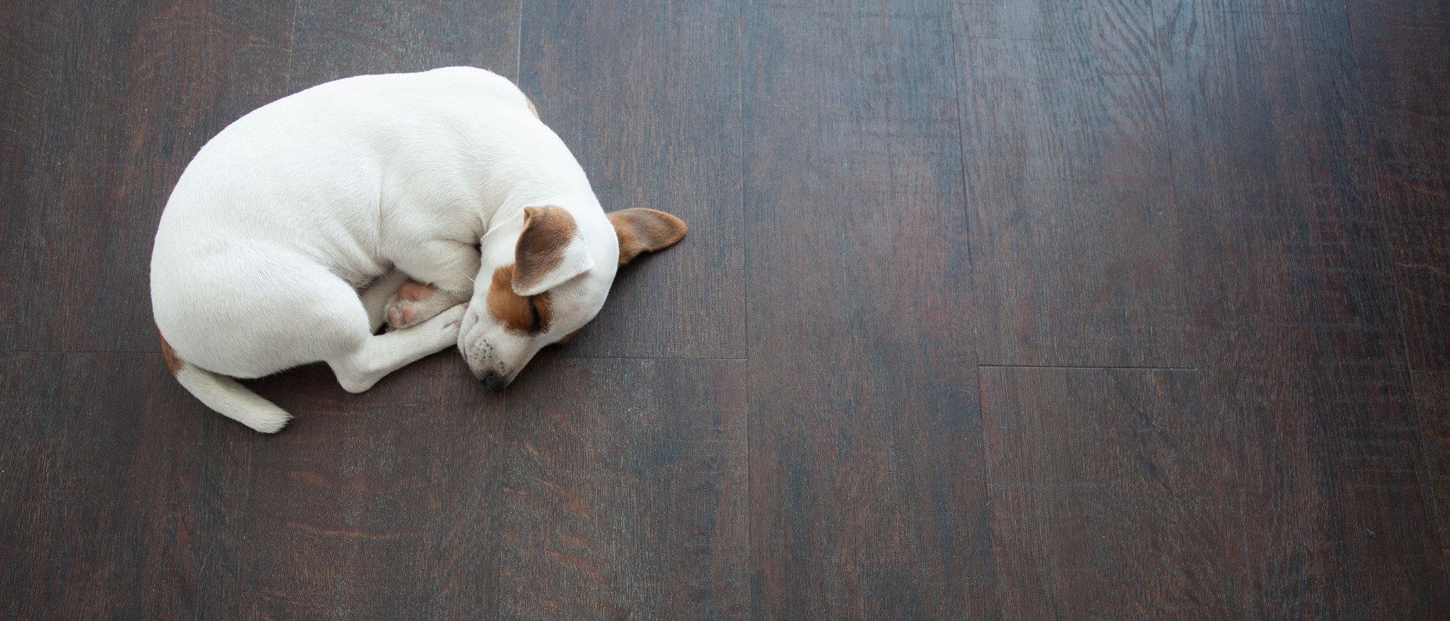 ¿Qué hago si mi hijo quiere un cachorro para Navidad?