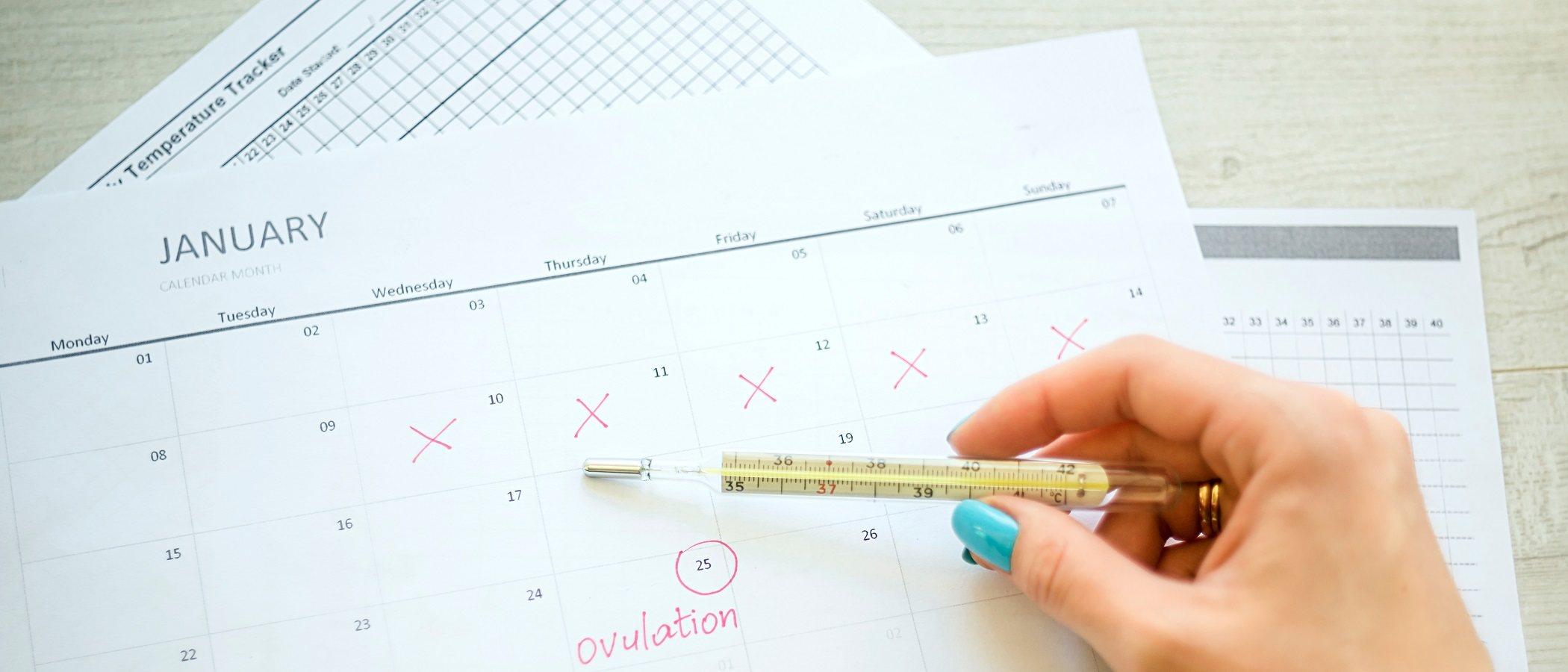 Cómo tomar la temperatura basal para saber los días fértiles