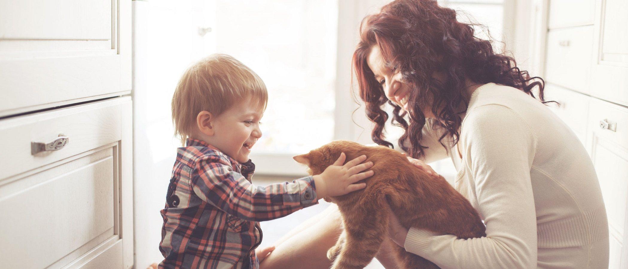 ¿Un bebé puede tener fiebre por el arañazo de un gato?
