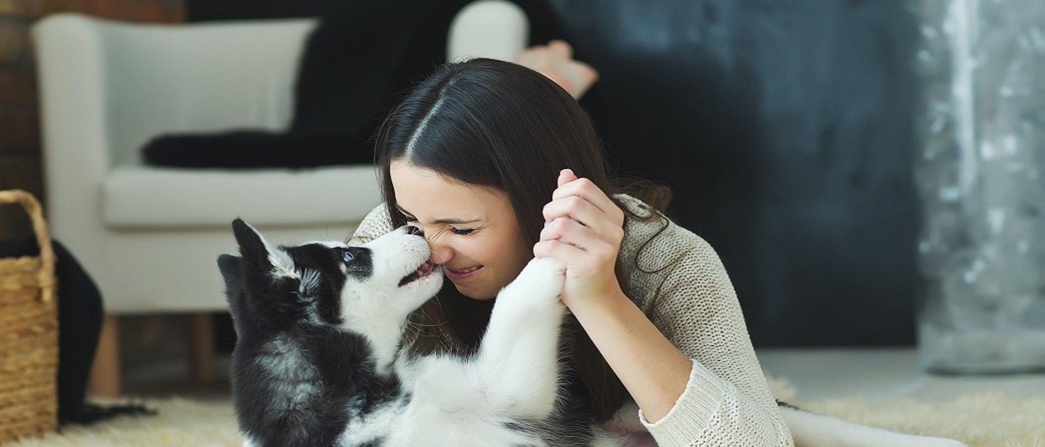 Las 5 mejores razas de perros para tu familia