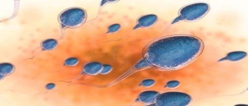 Cómo saber si estás embarazada si tomas pastillas anticonceptivas