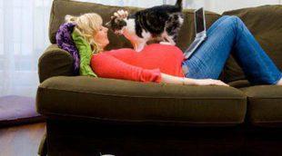 Medidas para prevenir la toxoplasmosis en el embarazo si tienes gato
