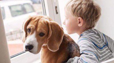 Cómo ayudar a un niño a afrontar la muerte de su mascota