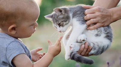 7 consejos para que tu bebé y tu gato convivan y sean grandes amigos