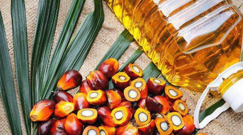 El aceite de palma en la alimentación de los niños, ¿qué efectos tiene?