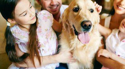 Descubre si tu familia está lista para tener mascota