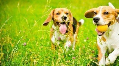 Qué debes tener en cuenta antes de adoptar un perro