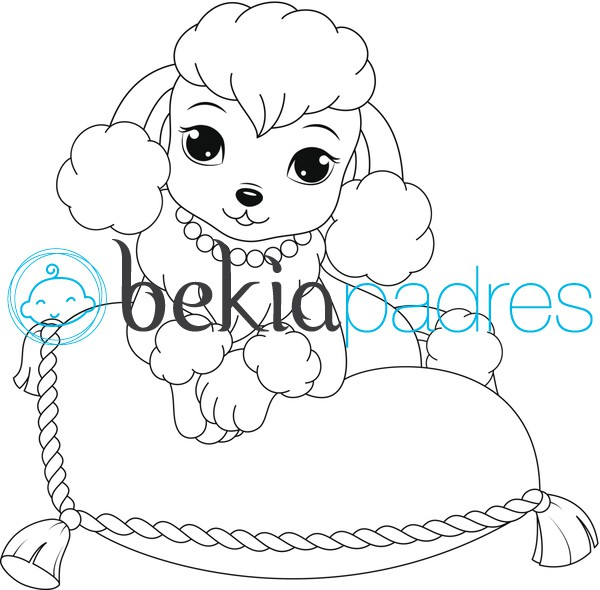 Perro caniche: dibujo para colorear
