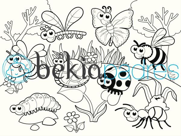 Insectos En El Jardín Dibujo Para Colorear