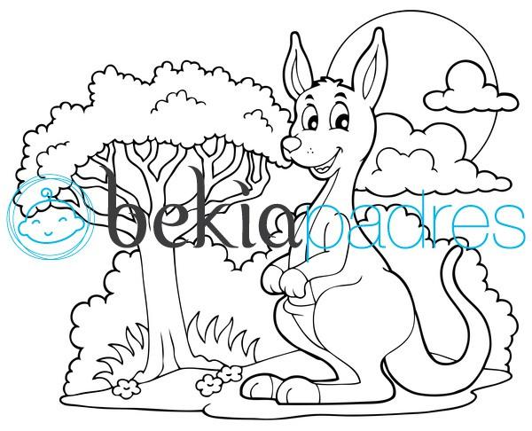 Canguro: dibujo para colorear